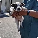 Adopt A Pet :: Corbin