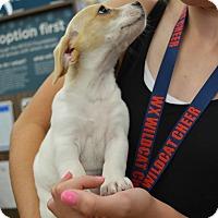 Adopt A Pet :: Murphy - Ogden, UT