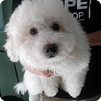 Adopt A Pet :: Smoochie` - Thousand Oaks, CA