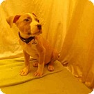 Adopt A Pet :: KEVIN