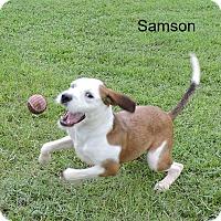 Adopt A Pet :: Samson - Slidell, LA