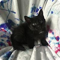 Adopt A Pet :: Helga - Tampa, FL