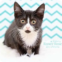 Adopt A Pet :: Bowie - Sterling Heights, MI