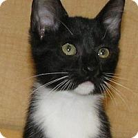 Adopt A Pet :: Ellen - Tulsa, OK