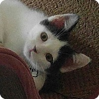 Adopt A Pet :: Panda Bear - Amherst, MA