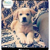 Adopt A Pet :: Simon - Plainfield, IL