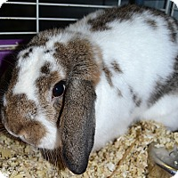 Adopt A Pet :: Clover - Michigan City, IN