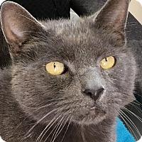 Adopt A Pet :: Poseidon - Clayville, RI