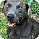 Adopt A Pet :: Logger (In RI)