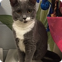 Adopt A Pet :: Marra - Manchester, CT