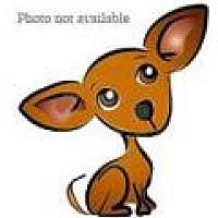 Chihuahua/Dachshund Mix Dog for adoption in San Bernardino, California - URGENT on 1/5 SAN BERNARDINO