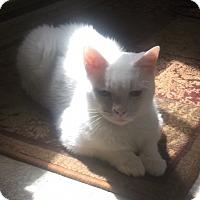 Adopt A Pet :: Riley - Richmond, VA