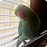 Adopt A Pet :: Riley - Tampa, FL