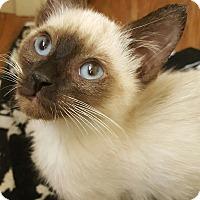 Adopt A Pet :: Willie - Woodland, CA