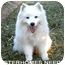 Photo 1 - American Eskimo Dog/Spitz (Unknown Type, Medium) Mix Dog for adoption in Downey, California - AMERICAN ESKIMOS-Foster Families Needed!