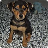 Adopt A Pet :: zoey's male pups - Washington, PA