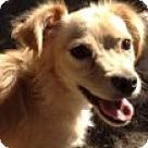Adopt A Pet :: Randy