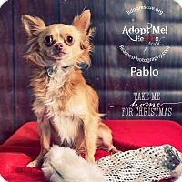 Adopt A Pet :: Pablo - Shawnee Mission, KS