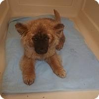 Adopt A Pet :: Gabby - Baltimore, MD