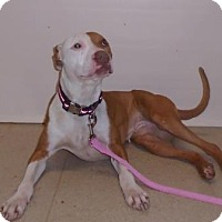 Adopt A Pet :: Angie - Gary, IN