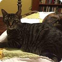 Adopt A Pet :: Mance - Gaithersburg, MD