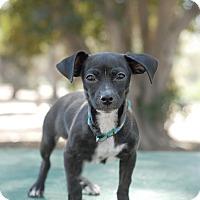 Adopt A Pet :: Rupert - San Diego, CA