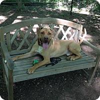 Adopt A Pet :: Ecko - Walden, NY