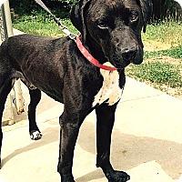 Adopt A Pet :: Simmerson - Willingboro, NJ