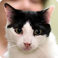 Adopt A Pet :: Jessie - New York, NY