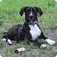 Adopt A Pet :: Abel - Joliet, IL