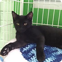 Adopt A Pet :: Dahlia - Bloomingdale, NJ