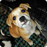 Adopt A Pet :: **MERLOT - Peralta, NM