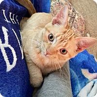 Adopt A Pet :: Xerox - South Bend, IN