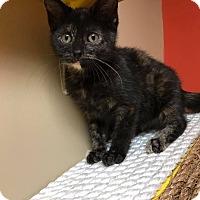 Adopt A Pet :: Ali - Maryville, MO