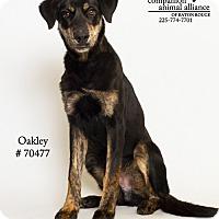 Adopt A Pet :: Oakley - Baton Rouge, LA