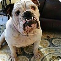 Adopt A Pet :: Meme - Odessa, FL