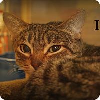 Adopt A Pet :: Ivy - Springfield, PA
