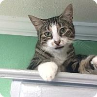 Adopt A Pet :: Ella - Roseburg, OR