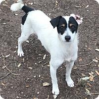 Adopt A Pet :: Oscar - Boerne, TX