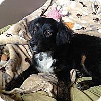 Adopt A Pet :: Lucie - Homewood, AL