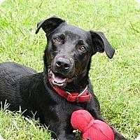 Adopt A Pet :: Roo - Mocksville, NC
