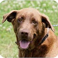 Adopt A Pet :: Jocelyn - kennebunkport, ME
