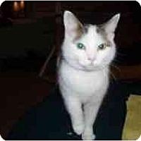Adopt A Pet :: Olive - Hamburg, NY
