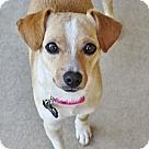 Adopt A Pet :: Neo