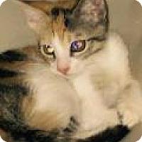 Adopt A Pet :: Cali - Mission Viejo, CA