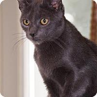 Adopt A Pet :: Mirabella - Philadelphia, PA