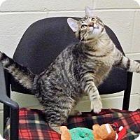 Adopt A Pet :: Carter - Arlington/Ft Worth, TX