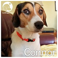 Adopt A Pet :: Connor - Pittsburgh, PA