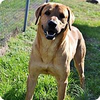 Adopt A Pet :: Marsh - Falls Church, VA