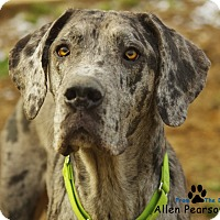 Adopt A Pet :: Abel - Manassas, VA